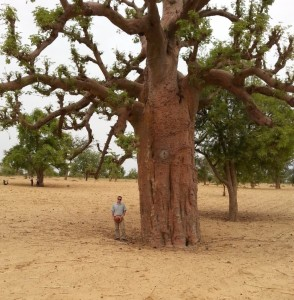 20130528_113131 E baobab Dogon 2013 cmp